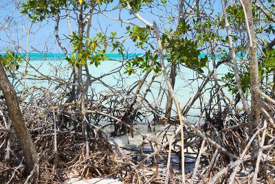 Cuba Fuerte Collection - Mangroves-Philippe Hugonnard-Photographic Print