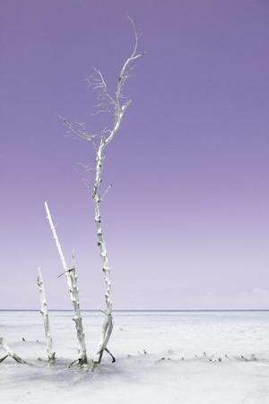 Cuba Fuerte Collection - Ocean Nature - Pastel Purple-Philippe Hugonnard-Photographic Print