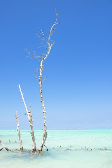 Cuba Fuerte Collection - Ocean Nature-Philippe Hugonnard-Photographic Print