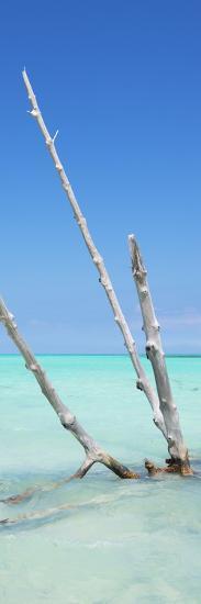 Cuba Fuerte Collection Panoramic - Aquatic Tree-Philippe Hugonnard-Photographic Print