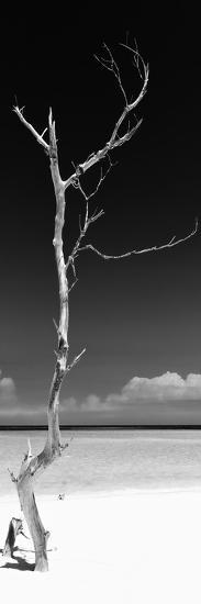 Cuba Fuerte Collection Panoramic BW - Solitary Tree-Philippe Hugonnard-Photographic Print