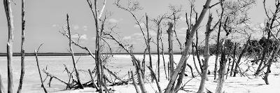 Cuba Fuerte Collection Panoramic BW - Tropical Wild Beach-Philippe Hugonnard-Photographic Print