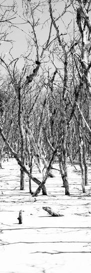 Cuba Fuerte Collection Panoramic BW - White Forest-Philippe Hugonnard-Photographic Print