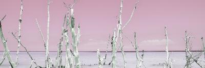 Cuba Fuerte Collection Panoramic - Ocean Wild Nature - Pastel Pink-Philippe Hugonnard-Photographic Print