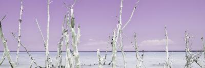 Cuba Fuerte Collection Panoramic - Ocean Wild Nature - Pastel Purple-Philippe Hugonnard-Photographic Print