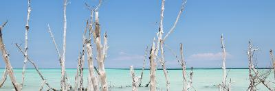 Cuba Fuerte Collection Panoramic - Ocean Wild Nature-Philippe Hugonnard-Photographic Print