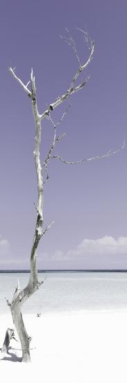 Cuba Fuerte Collection Panoramic - Solitary Tree - Pastel Mauve-Philippe Hugonnard-Photographic Print