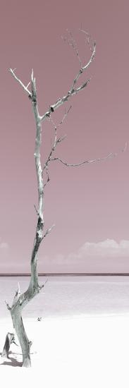 Cuba Fuerte Collection Panoramic - Solitary Tree - Pastel Red-Philippe Hugonnard-Photographic Print