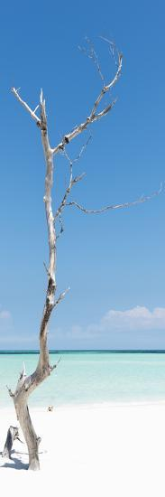 Cuba Fuerte Collection Panoramic - Solitary Tree-Philippe Hugonnard-Photographic Print
