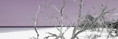 Cuba Fuerte Collection Panoramic - Tropical Beach Nature - Pastel Purple-Philippe Hugonnard-Photographic Print