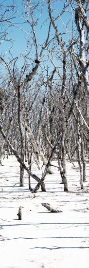 Cuba Fuerte Collection Panoramic - White Forest-Philippe Hugonnard-Photographic Print