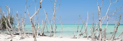 Cuba Fuerte Collection Panoramic - Wild Beach-Philippe Hugonnard-Photographic Print
