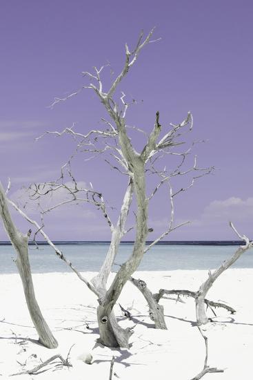 Cuba Fuerte Collection - Purple Stillness II-Philippe Hugonnard-Photographic Print