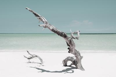 Cuba Fuerte Collection - Solitary Tree on the Beach - Pastel Aquamarine-Philippe Hugonnard-Photographic Print