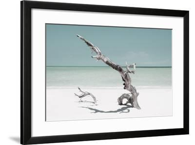 Cuba Fuerte Collection - Solitary Tree on the Beach - Pastel Aquamarine-Philippe Hugonnard-Framed Photographic Print