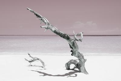 Cuba Fuerte Collection - Solitary Tree on the Beach - Pastel Red-Philippe Hugonnard-Photographic Print
