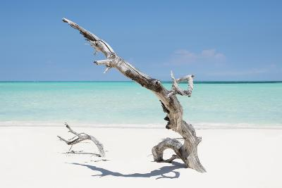 Cuba Fuerte Collection - Solitary Tree on the Beach-Philippe Hugonnard-Photographic Print