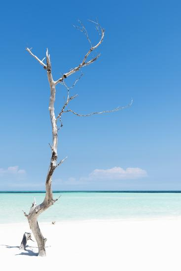 Cuba Fuerte Collection - Solitary Tree-Philippe Hugonnard-Photographic Print