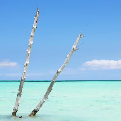 Cuba Fuerte Collection SQ - Aquatic Tree-Philippe Hugonnard-Photographic Print