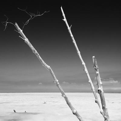 Cuba Fuerte Collection SQ BW - Aquatic Trees-Philippe Hugonnard-Photographic Print