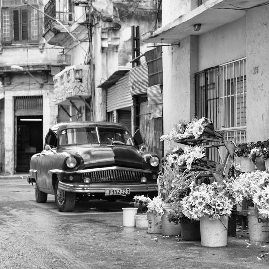 Cuba Fuerte Collection SQ BW - Sunflowers-Philippe Hugonnard-Photographic Print