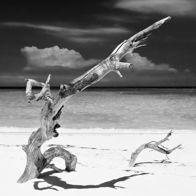Cuba Fuerte Collection SQ BW - Trees Movement II-Philippe Hugonnard-Photographic Print