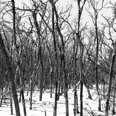 Cuba Fuerte Collection SQ BW - White Forest III-Philippe Hugonnard-Photographic Print