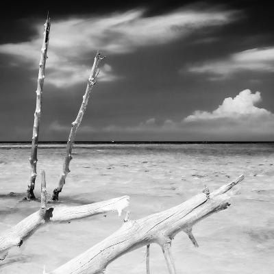 Cuba Fuerte Collection SQ BW - White Trees-Philippe Hugonnard-Photographic Print