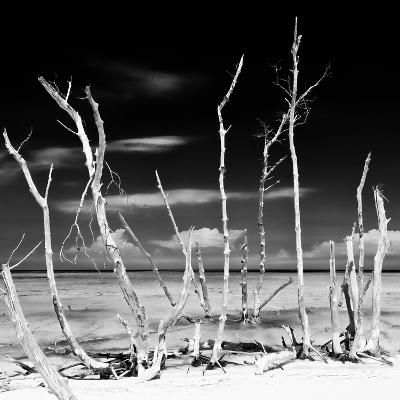 Cuba Fuerte Collection SQ BW - White water Tree Forest-Philippe Hugonnard-Photographic Print