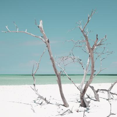 Cuba Fuerte Collection SQ - Coral Green Stillness-Philippe Hugonnard-Photographic Print