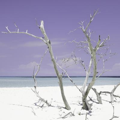 Cuba Fuerte Collection SQ - Purple Stillness-Philippe Hugonnard-Photographic Print