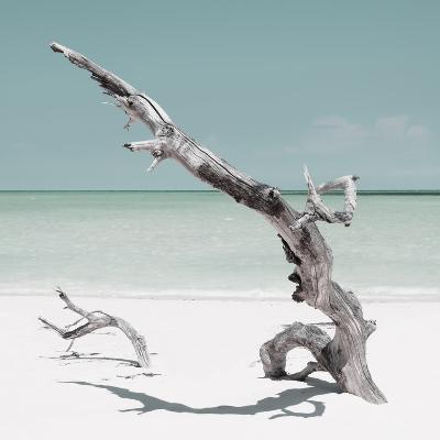 Cuba Fuerte Collection SQ - Solitary Tree - Pastel Aquamarine-Philippe Hugonnard-Photographic Print