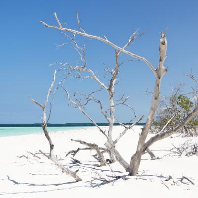 Cuba Fuerte Collection SQ - Tropical Beach Nature-Philippe Hugonnard-Photographic Print
