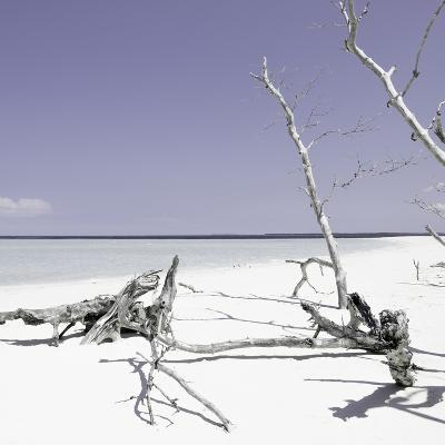 Cuba Fuerte Collection SQ - Wild White Sand Beach - Pastel Purple-Philippe Hugonnard-Photographic Print