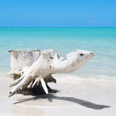 Cuba Fuerte Collection SQ - Wooden Turtle on the Beach-Philippe Hugonnard-Photographic Print