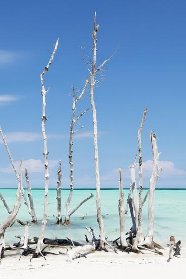 Cuba Fuerte Collection - White Trees V-Philippe Hugonnard-Photographic Print
