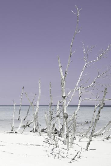 Cuba Fuerte Collection - Wild White Sand Beach III - Pastel Mauve-Philippe Hugonnard-Photographic Print
