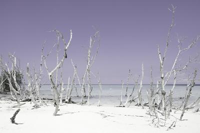 Cuba Fuerte Collection - Wild White Sand Beach - Pastel Mauve-Philippe Hugonnard-Photographic Print