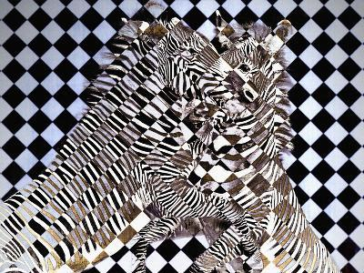 Cubist Zebras-Dee Smart-Photographic Print