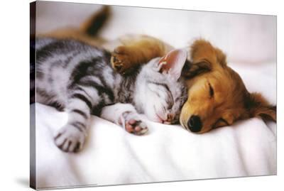 Cuddles (Sleeping Puppy and Kitten) Art Poster Print