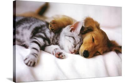 Cuddles (Sleeping Puppy and Kitten) Art Poster Print--Stretched Canvas Print