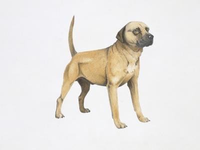 https://imgc.artprintimages.com/img/print/cur-dog_u-l-pvsv8h0.jpg?p=0