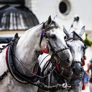 Horses and Carts on the Market in Krakow, Poland. by Curioso Travel Photography