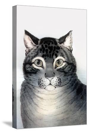 Favorite Cat