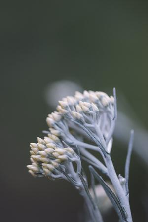https://imgc.artprintimages.com/img/print/curry-plant-in-the-botanical-garden_u-l-q1ezeah0.jpg?p=0