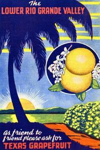 Texas Grapefruit by Curt Teich & Company