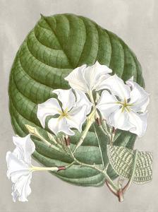 Alabaster Blooms I by Curtis
