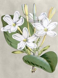 Alabaster Blooms II by Curtis
