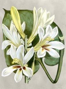 Alabaster Blooms IV by Curtis