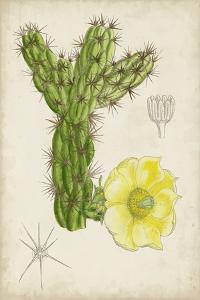 Antique Cactus I by Curtis